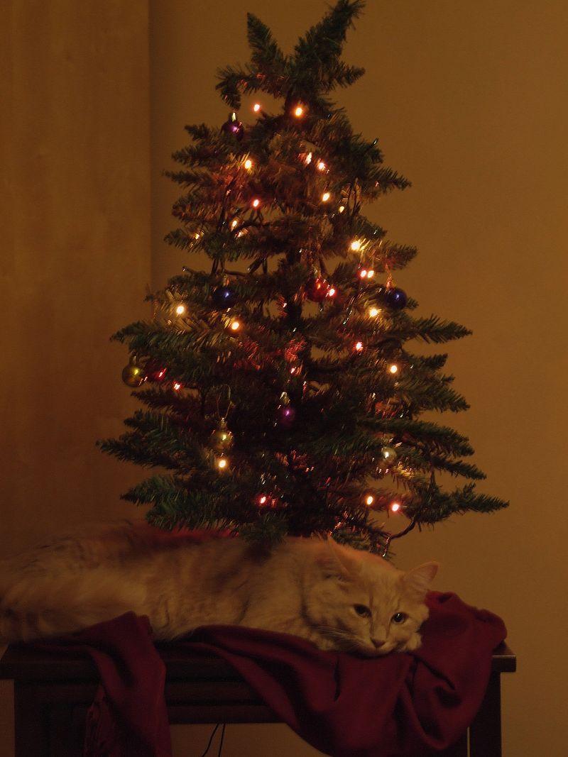 Christmas 2009 070