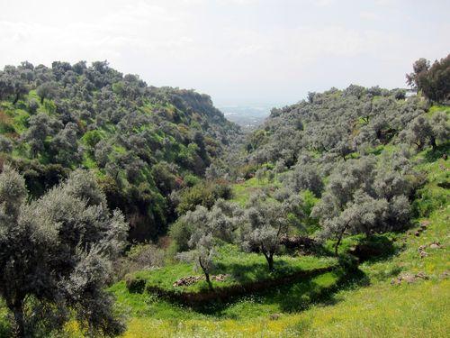 Gorge at Nysa